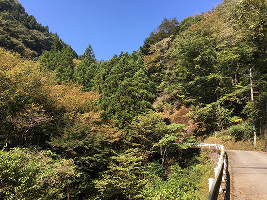 10月の檜原村。多分ヒルクライムにぴったりの坂。