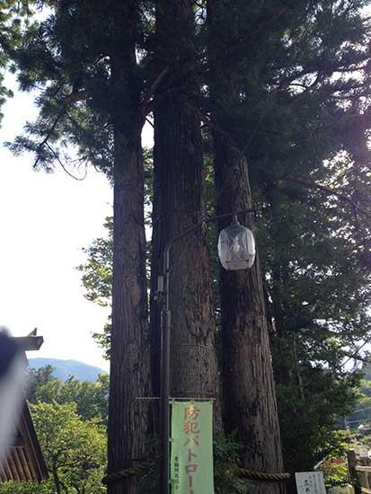 650Cロードバイクで奥多摩へ行った時の三本杉の写真