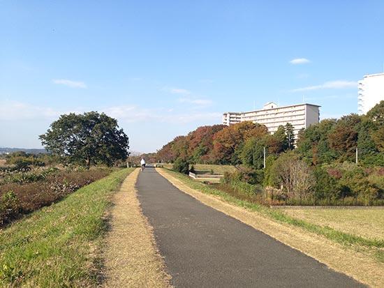 650Cロードバイクで走る多摩川サイクリングロードの紅葉